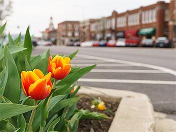 Flower State Street