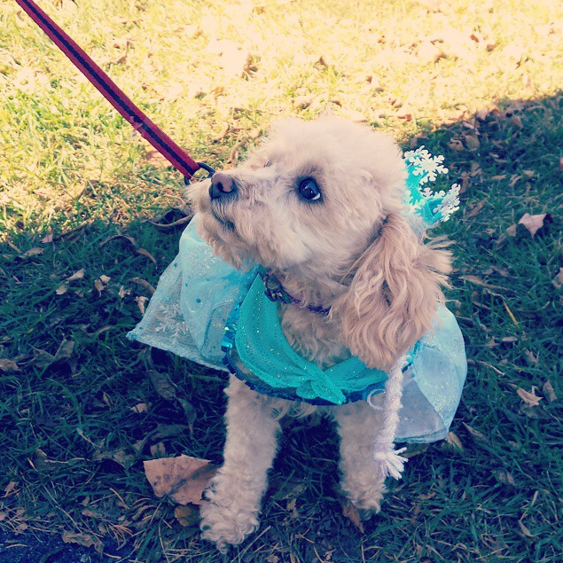 Lily dressed up as Elsa from Frozen at Peck Farm Park - HRK Portraits
