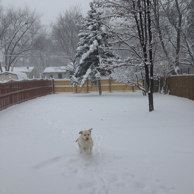 Dogs Love the Snow - Chris Stayer