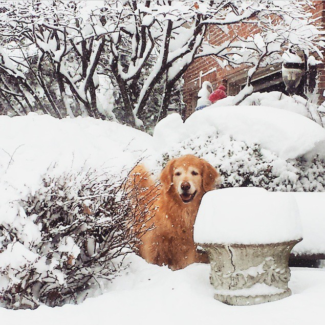 Dogs Love the Snow - Laura Whitten