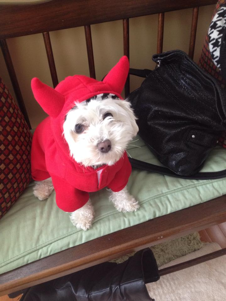 Mary Beth - dog halloween costume